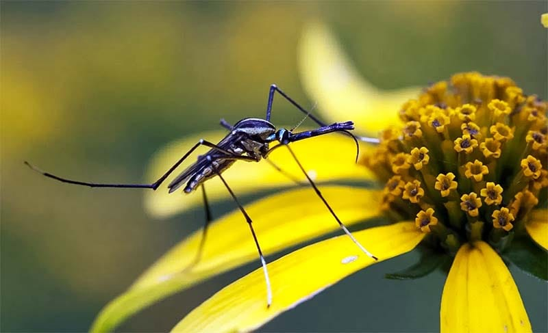 zanzara-20-800x400