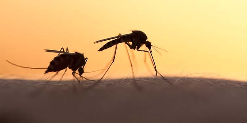 zanzara-21-800x400
