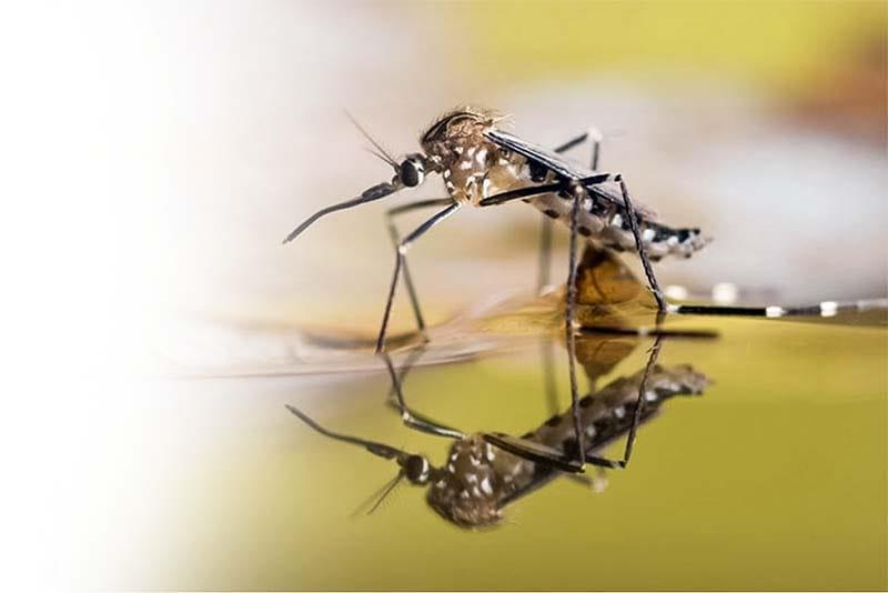 zanzara-23-800x400