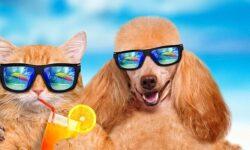 cani e gatti in vacanza-1-800x400