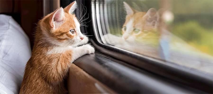 cani e gatti in vacanza-11-800x400