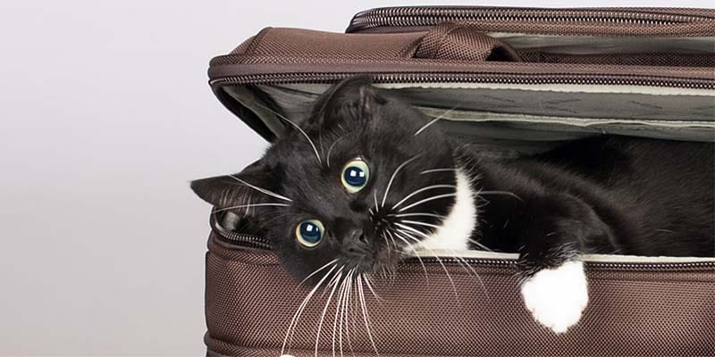 cani e gatti in vacanza-12-800x400