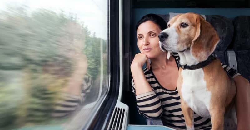 cani e gatti in vacanza-13-800x400