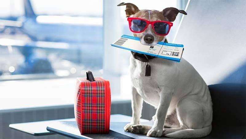 cani e gatti in vacanza-14-800x400