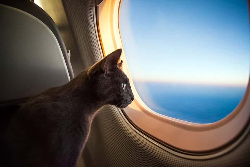 cani e gatti in vacanza-17-800x400