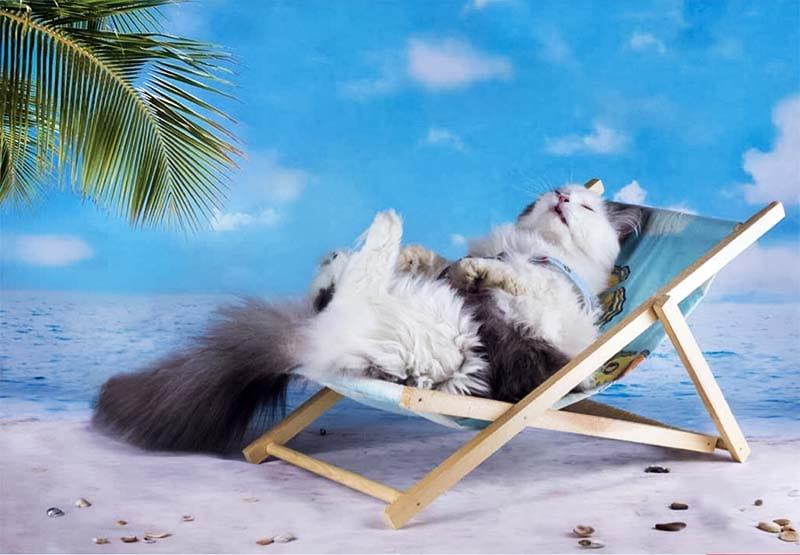 cani e gatti in vacanza-19-800x400