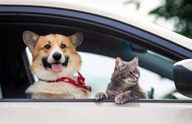 cani e gatti in vacanza-2-800x400