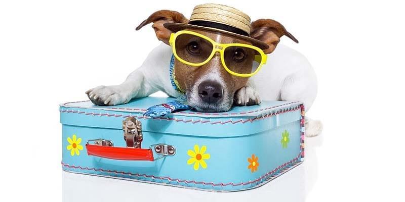 cani e gatti in vacanza-3-800x400
