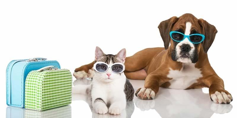 cani e gatti in vacanza-4-800x400