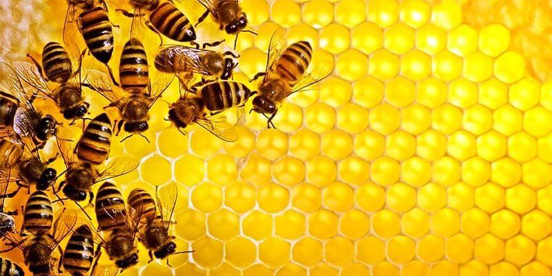 Api da scoprire: 10 domande su questi affascinanti insetti
