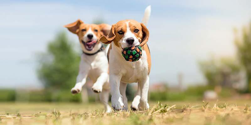 Cane e gioco: un'importantissima attività sociale che lo rende felice