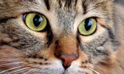 """Come ci vedono i gatti? Scopriamo tutti i segreti della """"pazzesca"""" relazione tra noi e loro"""