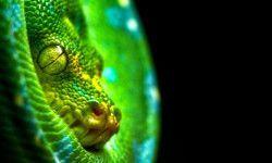 serpenti velenosi 800x400